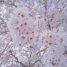 Springの画像(Springに関連した画像)