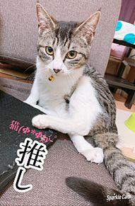 猫(Φ*Φ)y-゜゜゜繋がりとのDISHがLOVEなの プリ画像