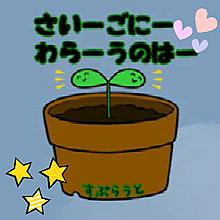 カイワレハンマーsproutの画像(sproutに関連した画像)
