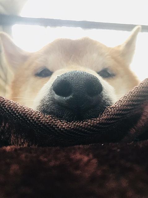 愛犬リアン💗の画像(プリ画像)