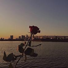 おしゃれ 🌹 保存➬いいねの画像(夕日に関連した画像)