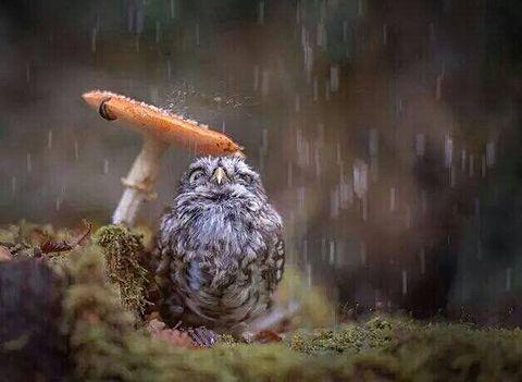 雨宿りちゃん(๑¯ㅁ¯๑)♡の画像(プリ画像)