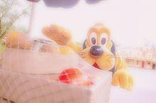 保存は♡ 果物×プルートの画像(東京ディズニーランドに関連した画像)