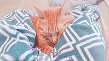おねむ。可愛い💓 プリ画像