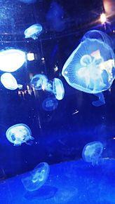 小樽水族館でデート(友達のKちゃん笑)の画像(小樽に関連した画像)
