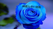 綺麗な青い薔薇の画像(プリ画像)