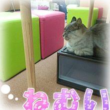 猫ฅ^•ω•^ฅ プリ画像