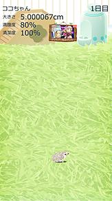 ハリネズミ プリ画像