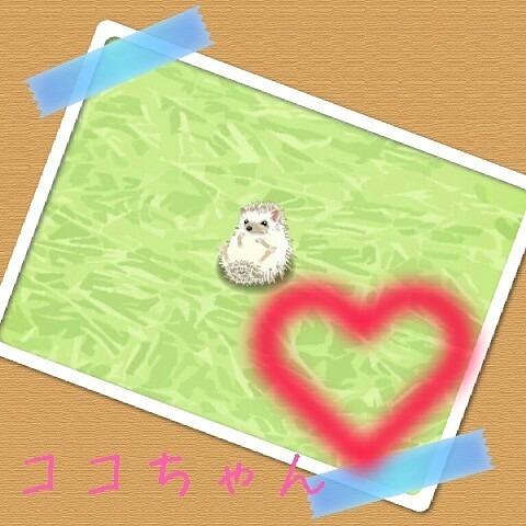 ココちゃん(﹡ˆ﹀ˆ﹡)♡の画像 プリ画像