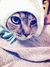 世界から猫が消えたなら プリ画像