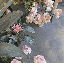 素材の画像(flowerに関連した画像)