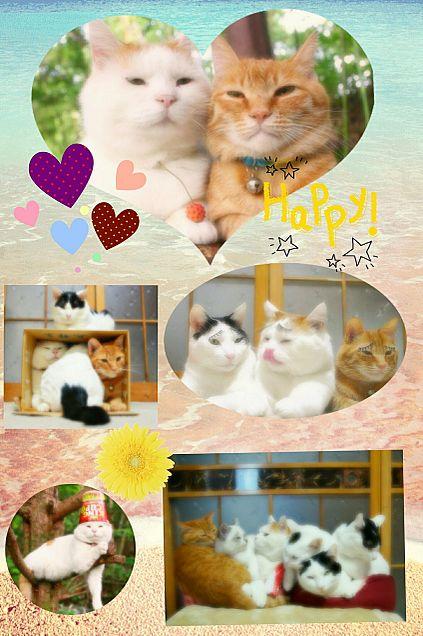 のせ猫の画像(プリ画像)