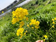 お花見の画像(お花見に関連した画像)