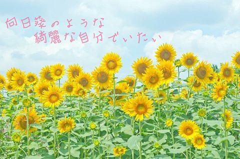 向日葵の画像(プリ画像)