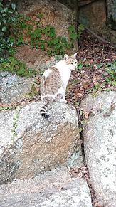 可愛い猫の画像(野良に関連した画像)