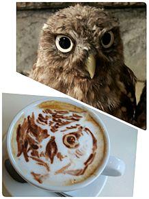 フクロウの画像(プリ画像)
