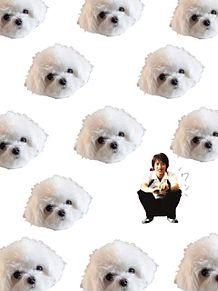 子犬 と 子犬 。の画像(プリ画像)