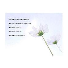 Flowerwallの画像(米津玄師/歌詞/リクエスト/恋愛に関連した画像)