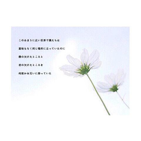 Flowerwallの画像 プリ画像