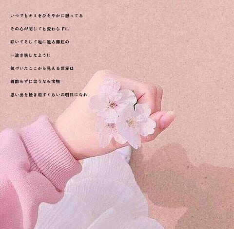 Sakura Messageの画像(プリ画像)