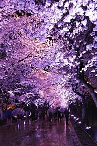 高田公園 プリ画像