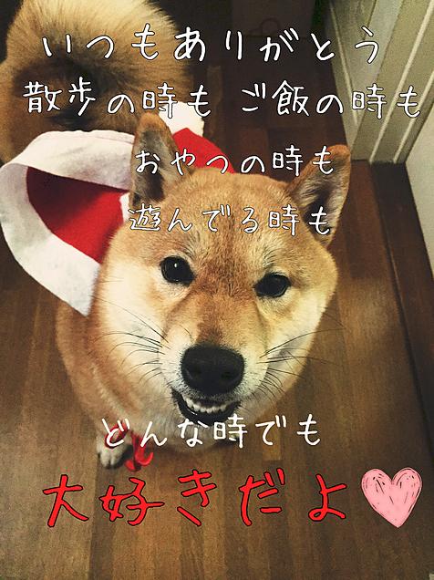犬@飼い主大好きの画像(プリ画像)