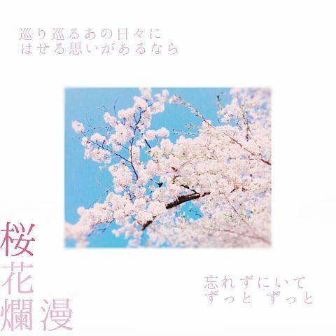 桜花爛漫の画像(プリ画像)