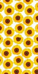 向日葵🌻  花柄  花模様  白背景の画像(ヒマワリに関連した画像)