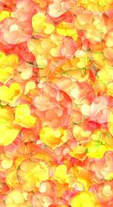 秋色  ハート  暖色系  グラデーションの画像(暖色に関連した画像)