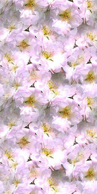 桜  桜花  桜柄  花柄  花模様の画像(プリ画像)