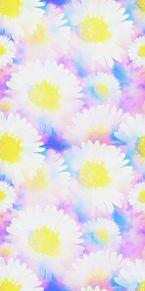 デージー  デイジー  花柄 花模様の画像(デイジーに関連した画像)