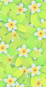 花柄  花模様  植物  グリーンの画像(ボタニカルに関連した画像)
