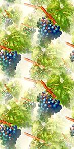 葡萄🍇  ぶどう  ブドウ  巨峰の画像(秋の味覚に関連した画像)