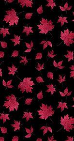 秋  秋色  紅葉  葉っぱ  黒背景 プリ画像