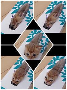 ティシュ箱wの画像(ティシュに関連した画像)