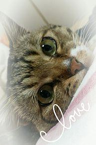 my pet の画像(PETに関連した画像)