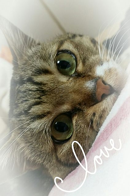 my pet の画像 プリ画像