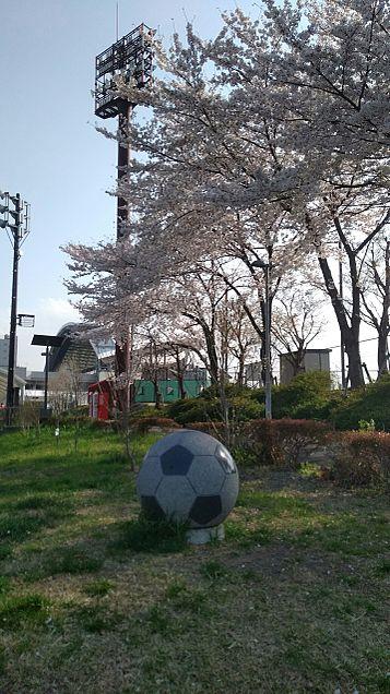 サッカーボールと桜と埼スタの画像(プリ画像)