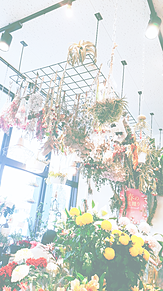 花屋の画像(花屋に関連した画像)