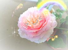 薔薇の写真の加工 プリ画像