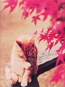 秋とねこの画像(プリ画像)