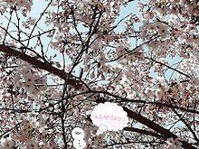 春の佐久間さんからのお便り〜 プリ画像