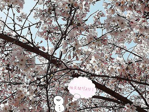 春の佐久間さんからのお便り〜の画像(プリ画像)