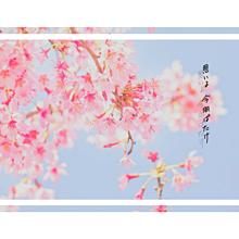 🌸 : 桜花爛漫 プリ画像