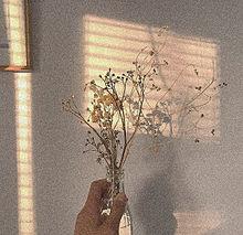 ◦ 花 ◦の画像(#ドライフラワーに関連した画像)