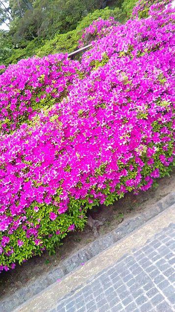 空、花、景色の画像(プリ画像)