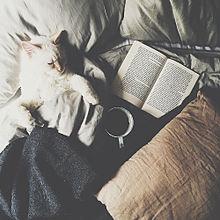 catの画像(猫に関連した画像)