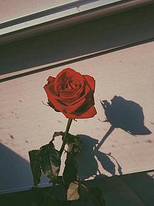 roseの画像(海外 オシャレに関連した画像)