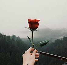 roseの画像(外国人に関連した画像)