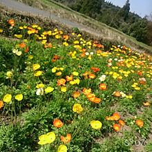 お花の画像(お花に関連した画像)